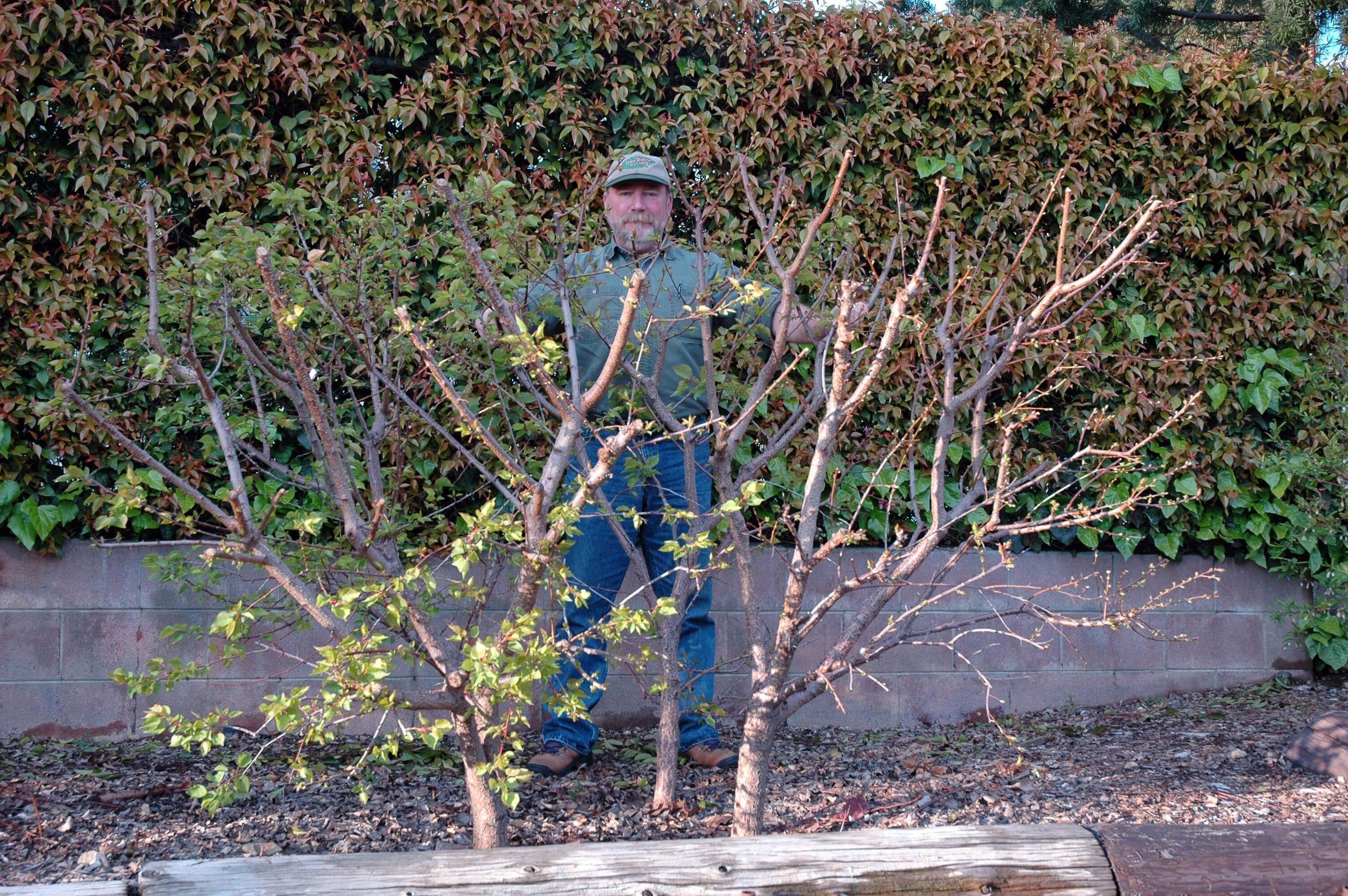 Selling Backyard Orchard Culture
